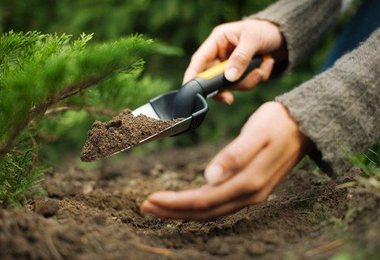 Lielisks iesākums jūsu jaunajiem augiem