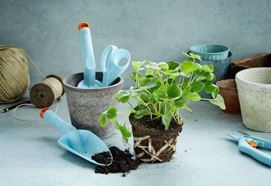 Padariet savu dārzu vēl krāšņāku