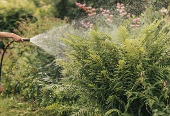 Izvēlieties savam klimatam pareizos augus